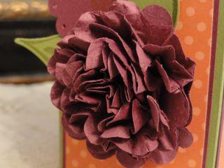 DetailRichRAzzleberryFlower